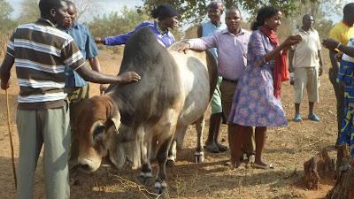 SAM 2136%2B %2BCopy - Ufugaji katika shamba la Rushu Ranchi Kisarawe