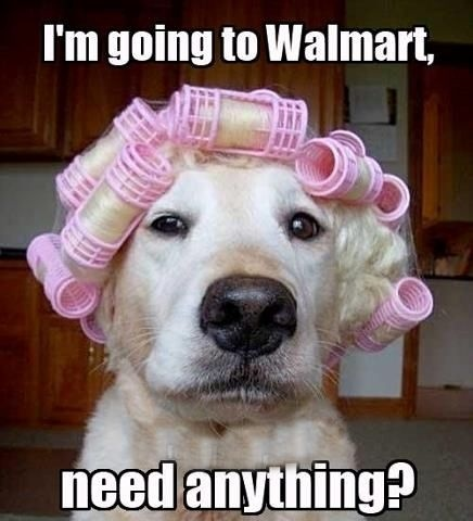 Going To Walmart Curlers Dog Picture