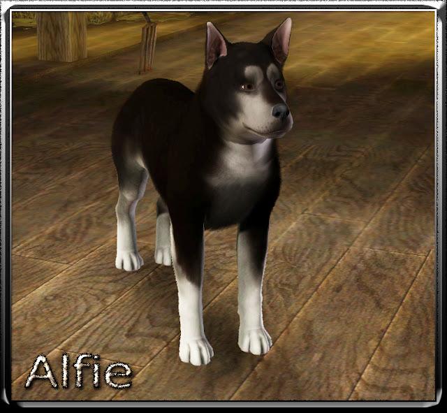 Alfie0.jpg