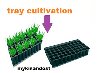 tray cultivation kya hota hai
