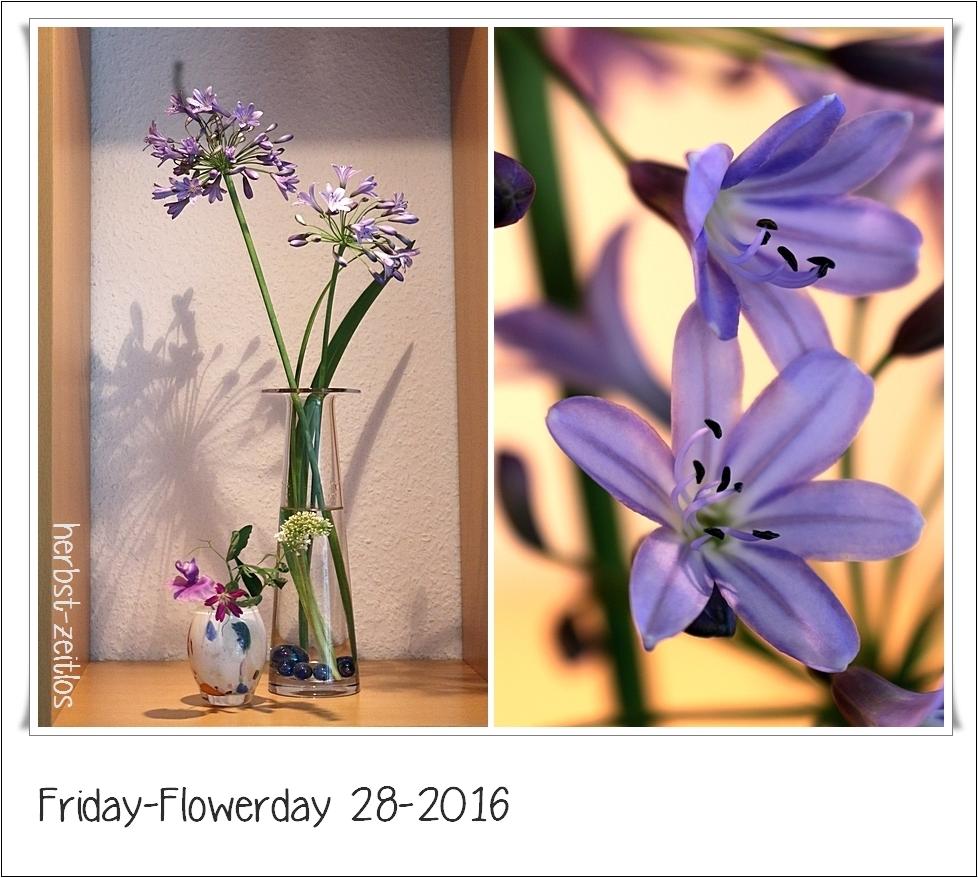 herbst zeitlos friday flowerday 28 2016 mit agapanthus. Black Bedroom Furniture Sets. Home Design Ideas