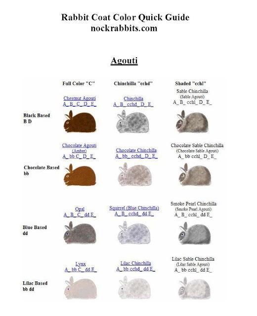 Mengenal tentang warna & gen warna Kelinci hias 2 lengkap