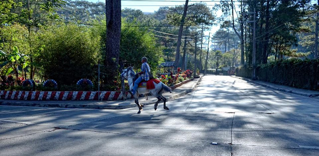 Equine in action Baguio City