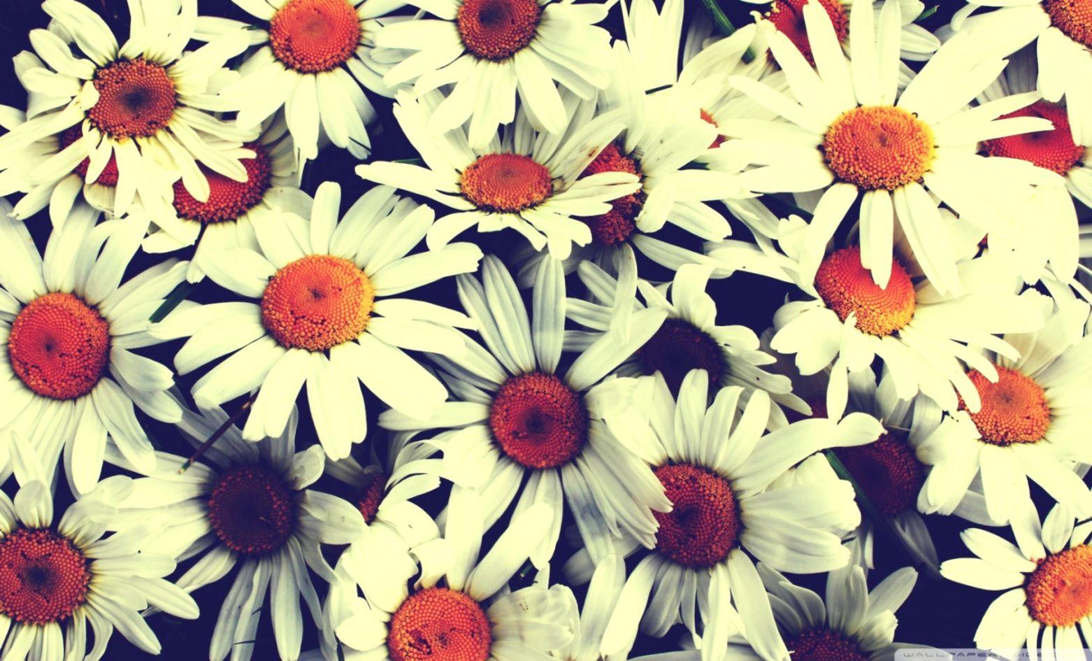 Beautiful Flowers Vintage Wallpaper Hd Download Wallpapers