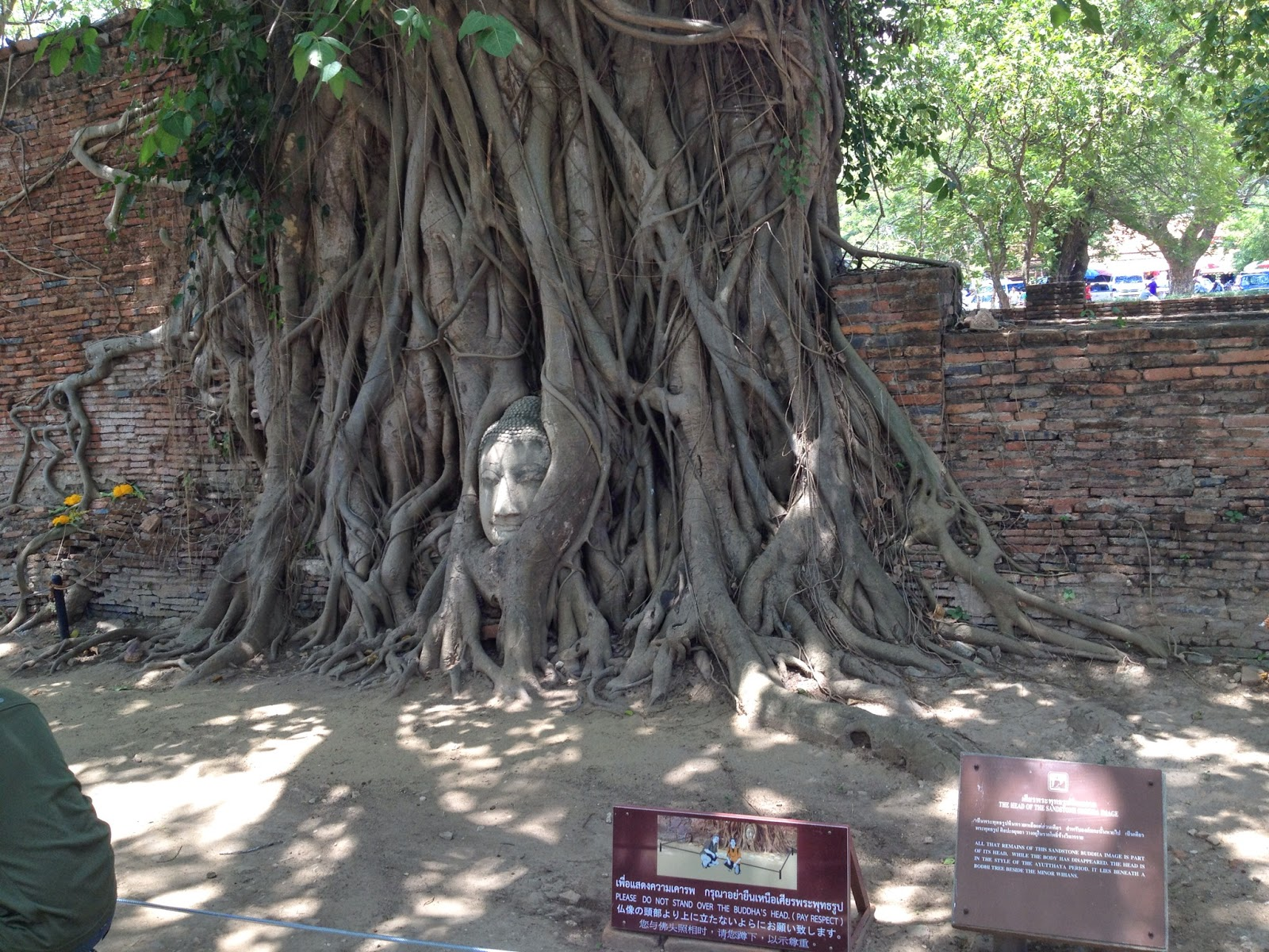 Ayutthaya - Wat Phra Mahathat, known for a tree that has grown around a Buddha head