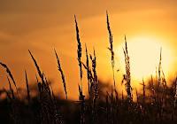 Gesù condivide il dolore dell'uomo: questa è la speranza narrata dal Vangelo nell'episodio di Lazzaro.