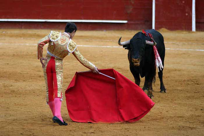 Does the colour red really make bulls angry?