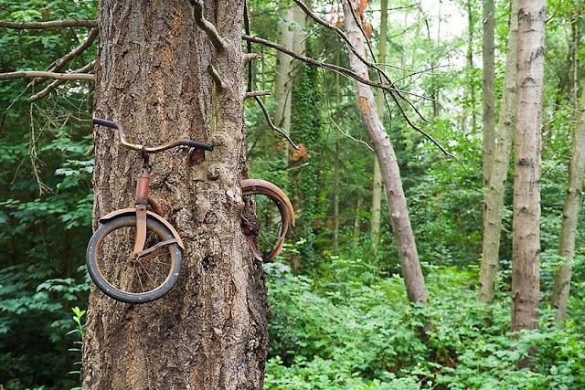 شجرة إلتهمت دراجة قديمة – واشنطن