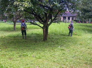 Jasa potong rumput lapangan | perawatan taman | pemangkasan | pemupukan dan lain sebagainya
