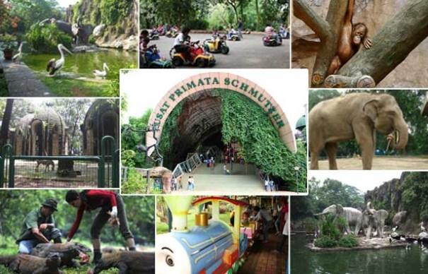 5 Kebun Binatang Di Indonesia Yang Wajib Kamu Kunjungi