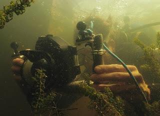 Foto Nieuwe reeks Wildernis onder water. https://portal.eo.nl/over-de-eo/pers/artikel/2018/10/nieuwe-reeks-wildernis-onder-water-op-npo-2/