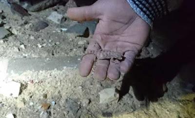 مخاوف من زحف كائنات برية الى سكان القاهرة الجديدة بعد انهيار سور الغابة