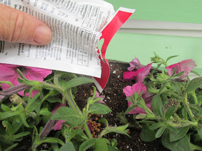 Fertilizing the plants-Vickie's Kitchen and Garden