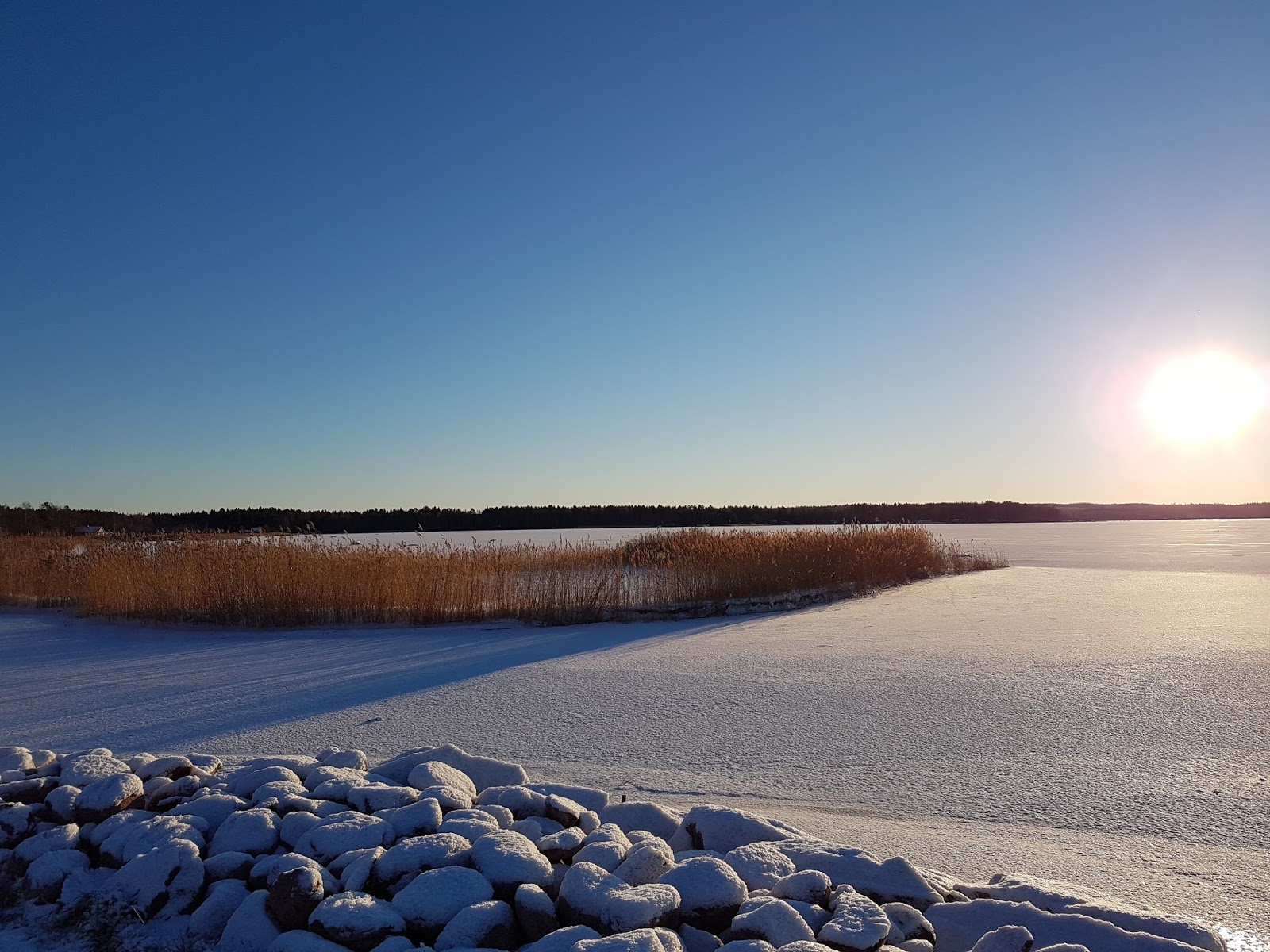frozen sea and reeds scenery picture