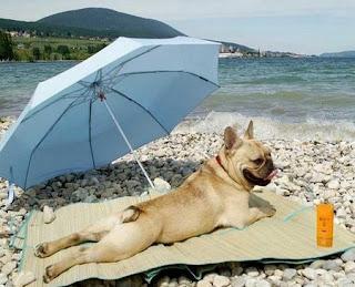 отпуск с собакой на море