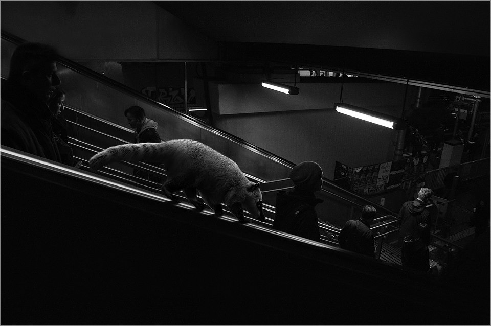 11-Possum-Ceslovas-Cesnakevicius-The-Zoo-on-our-Streets-Black-and-White-Photography-www-designstack-co