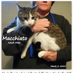 UPDATE 4/1/13WITHOUT YOUR HELP THESE CATS COULD DIE IN THE GAS CHAMBER.  URGENT Beautiful Cats