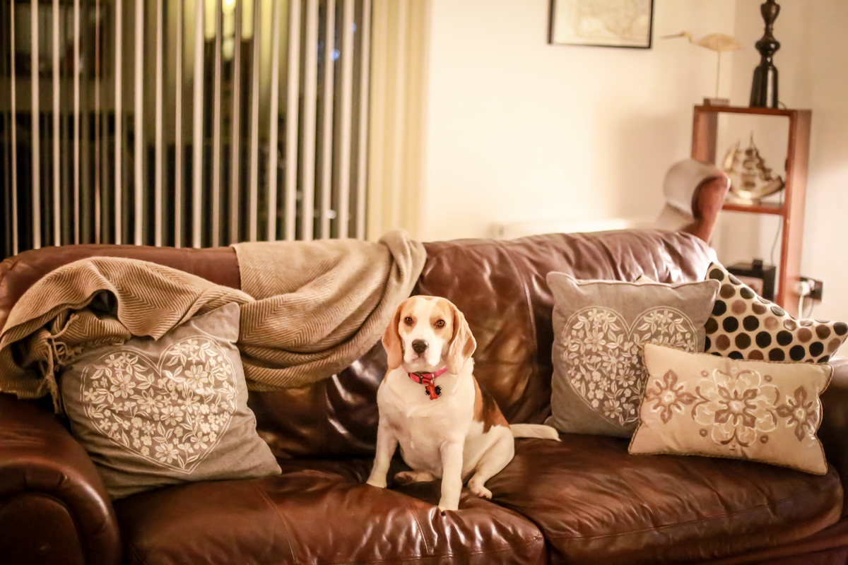 Dog Friendly Accommodation In Alnmouth