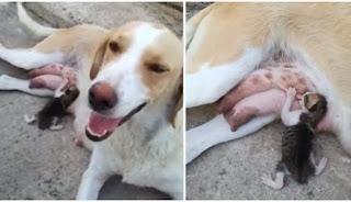 Σκυλίτσα θηλάζει γατάκι στην Λαμία που το πέταξαν στα σκουπίδια σε ένα βίντεο που συγκινεί