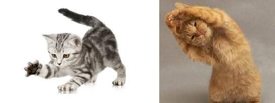 saglikli-kedi-nasil-anlasilir