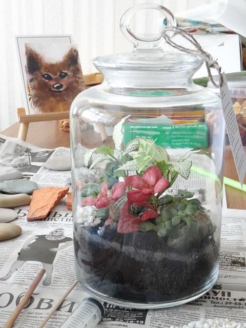 florarium with plants