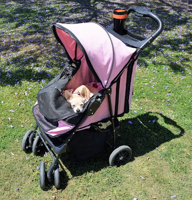 Pink chihuahua pet stroller