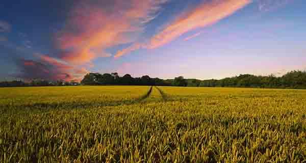 Usaha Peningkatan Pertanian