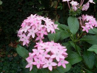 Λουλούδια σε χρώμα ροζ διάφορα