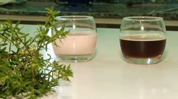 Cerveja e iogurte para diabéticos