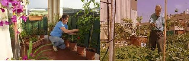 semillas plantas y muestras botnicas