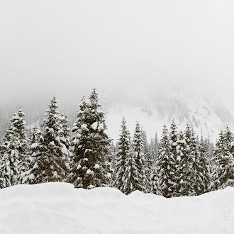 Kar ve Çam Ağaçları Hd Duvar Kağıdı