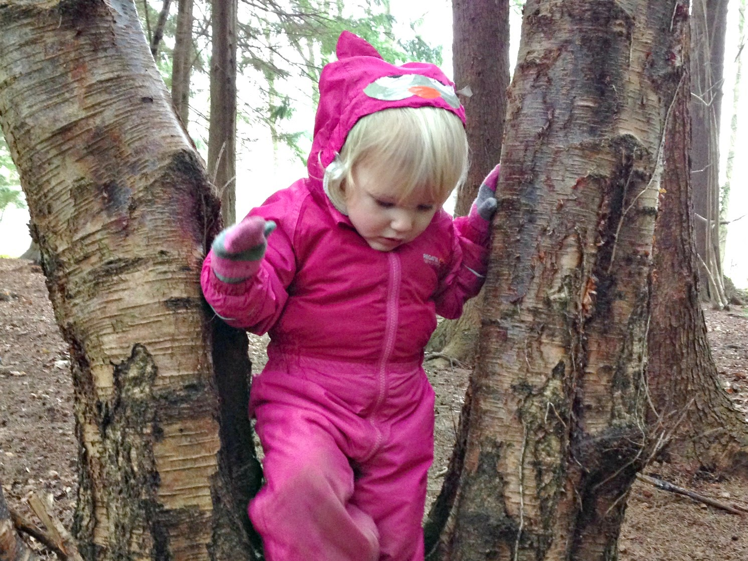 Tin Box Tot climbing between two trees