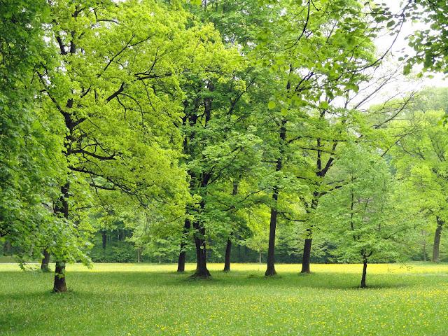 Foto pemandangan Alam Teridah bisa diperoleh oleh siapa saja yang memiliki alat potret at 5 Foto Pemandangan Alam Terindah