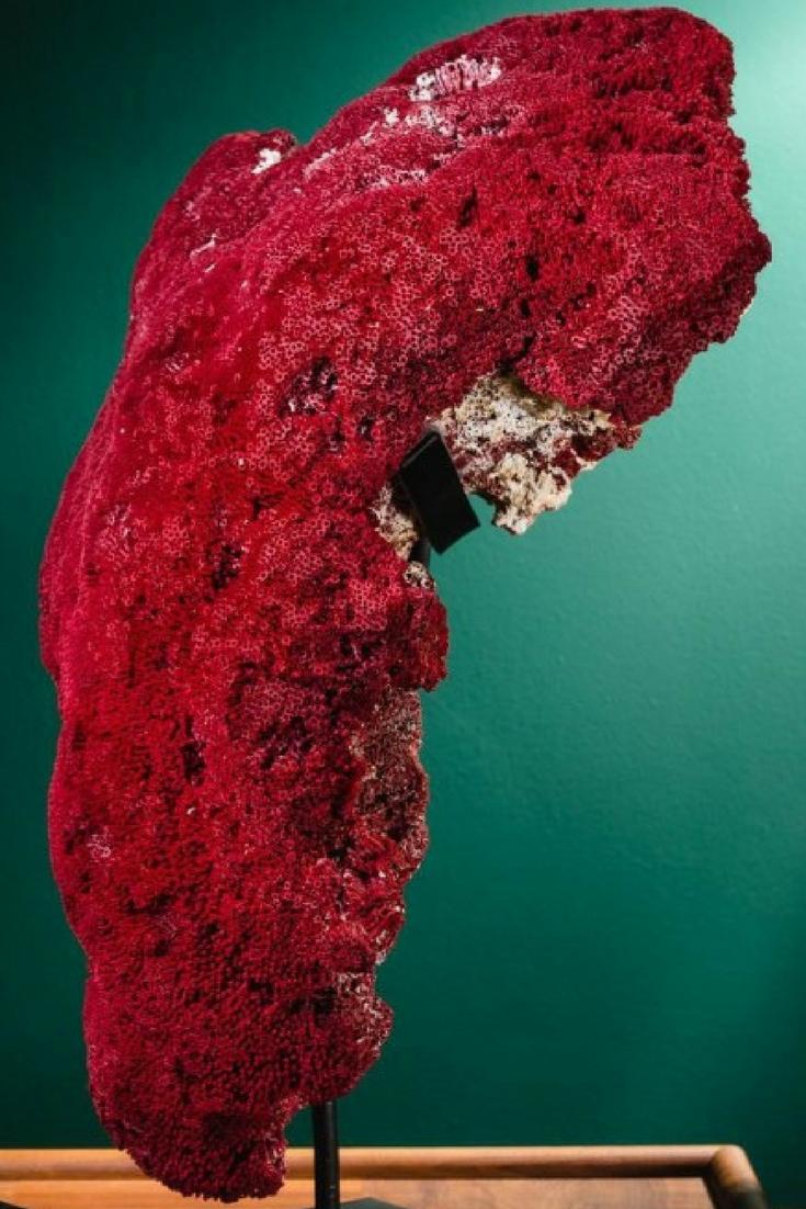 Hermoso coral rojo