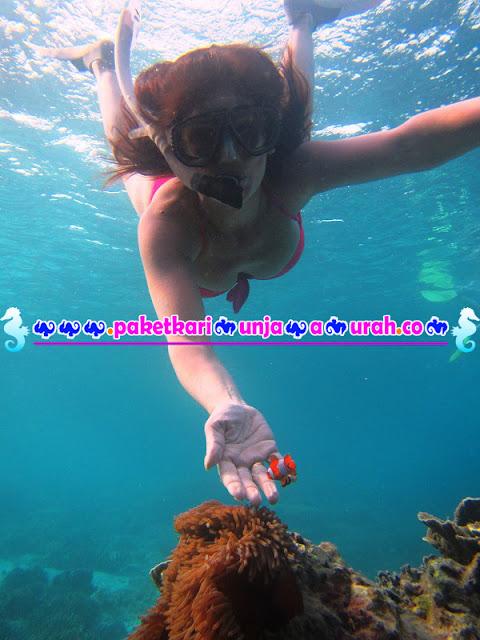Spot Nemo Paket Wisata Karimunjawa 3h2m
