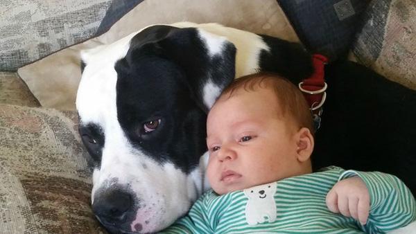 20 khoảnh khắc đáng yêu về tình bạn của các chú chó dành cho con trẻ