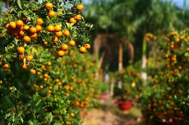 Ornamental plants - indispensable part of Tet 1