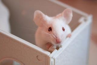 ratinhos marinheiros