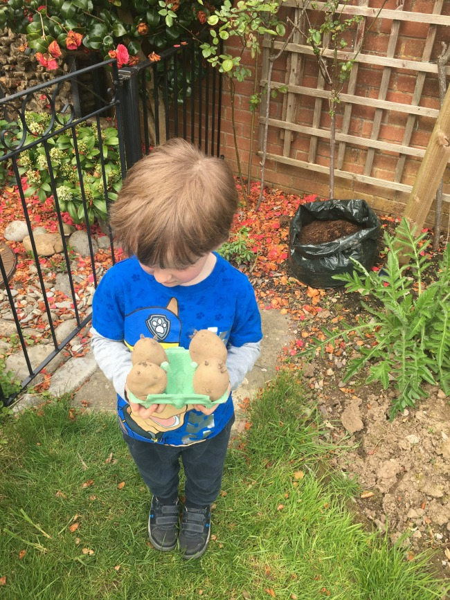 boy-holding-egg-box-with-four-potatoes-in-it