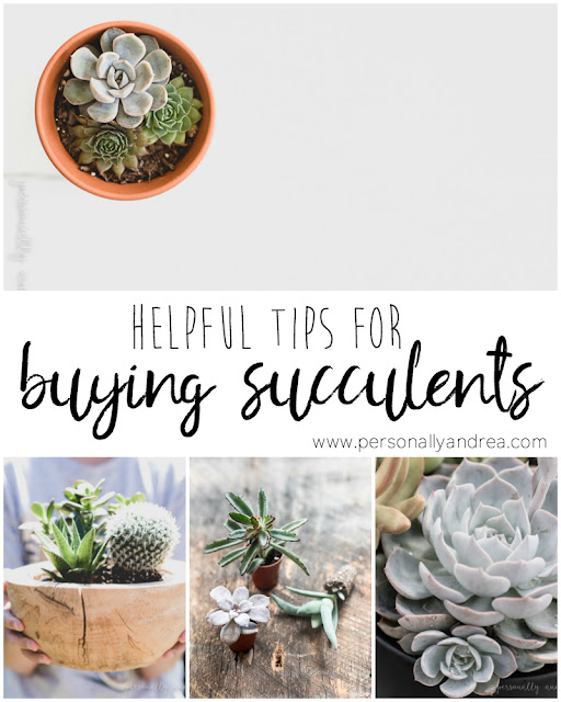 5 Helpful Tips for Buying Succulents | personallyandrea.com