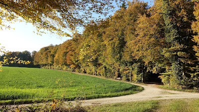 Farbiger Herbstwald bei Heimenhausen