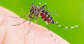 Como combater a Dengue?