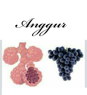 Keajaiban Buah Anggur Berkhasiat Untuk Membersihkan Paru-paru