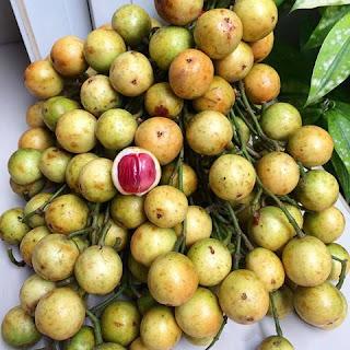 manfaat-buah-menteng-bagi-kesehatan,www.healthnote25.com