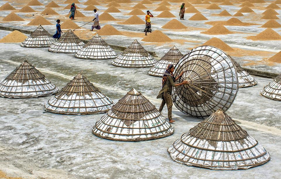 Pyramid-shaped covers used to protect rice in Bangladesh