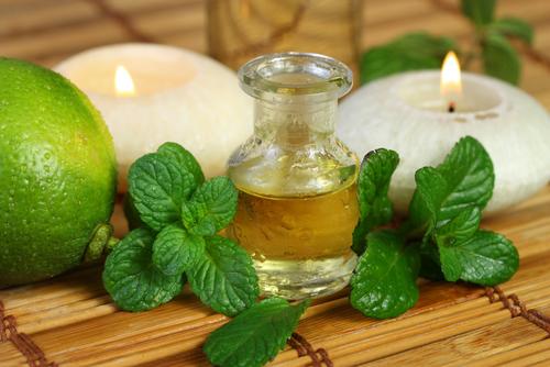Bạc hà, loại thần dược trong việc điều trị cảm cúm nhức đầu