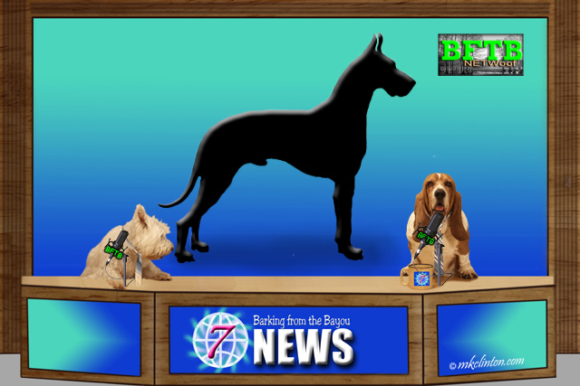 BFTB NETWoof News on Guinness Book of World Record's tallest dog