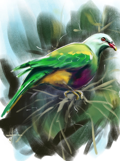 Wompoo fruit dove bird painting by Artmagenta