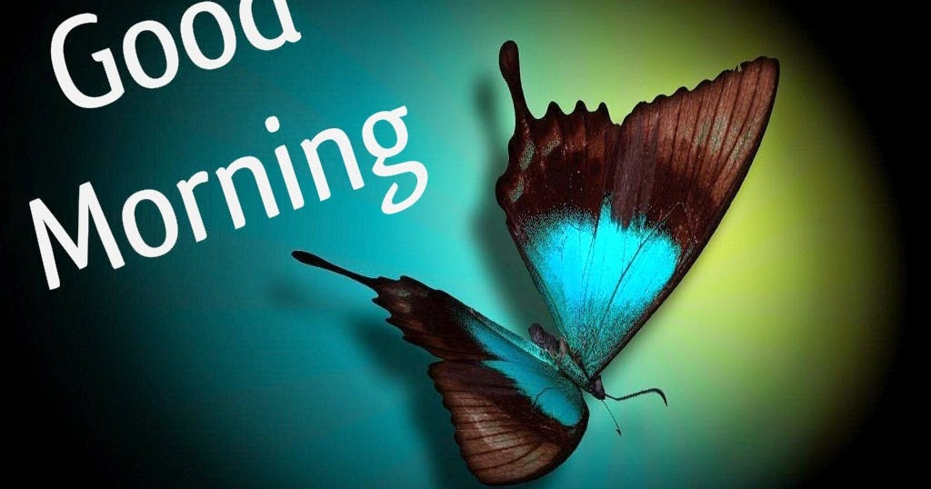 Butterfly Good Morning Photos Images Download | Festival