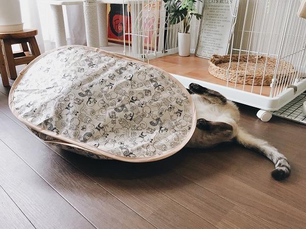 テントに上半身を突っ込んで仰向けにひっくり返ってるシャムトラ猫